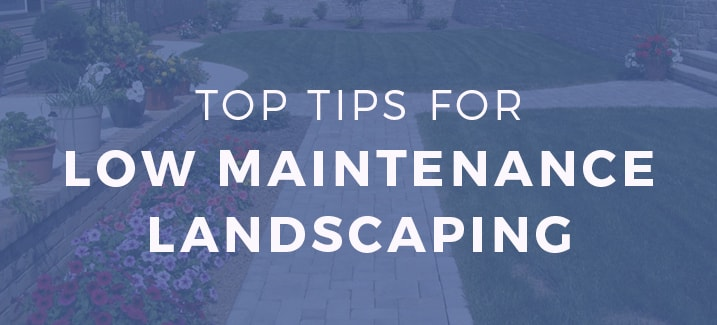top tips for low maintenance landscaping