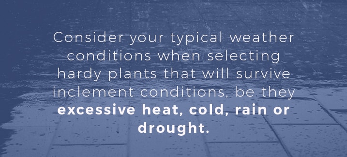 plant-selection-and-weather-conditions
